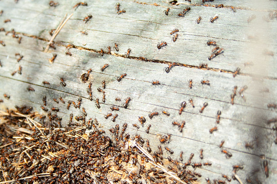 Take these Steps to Avoid Insect Infestation in Your Log Home